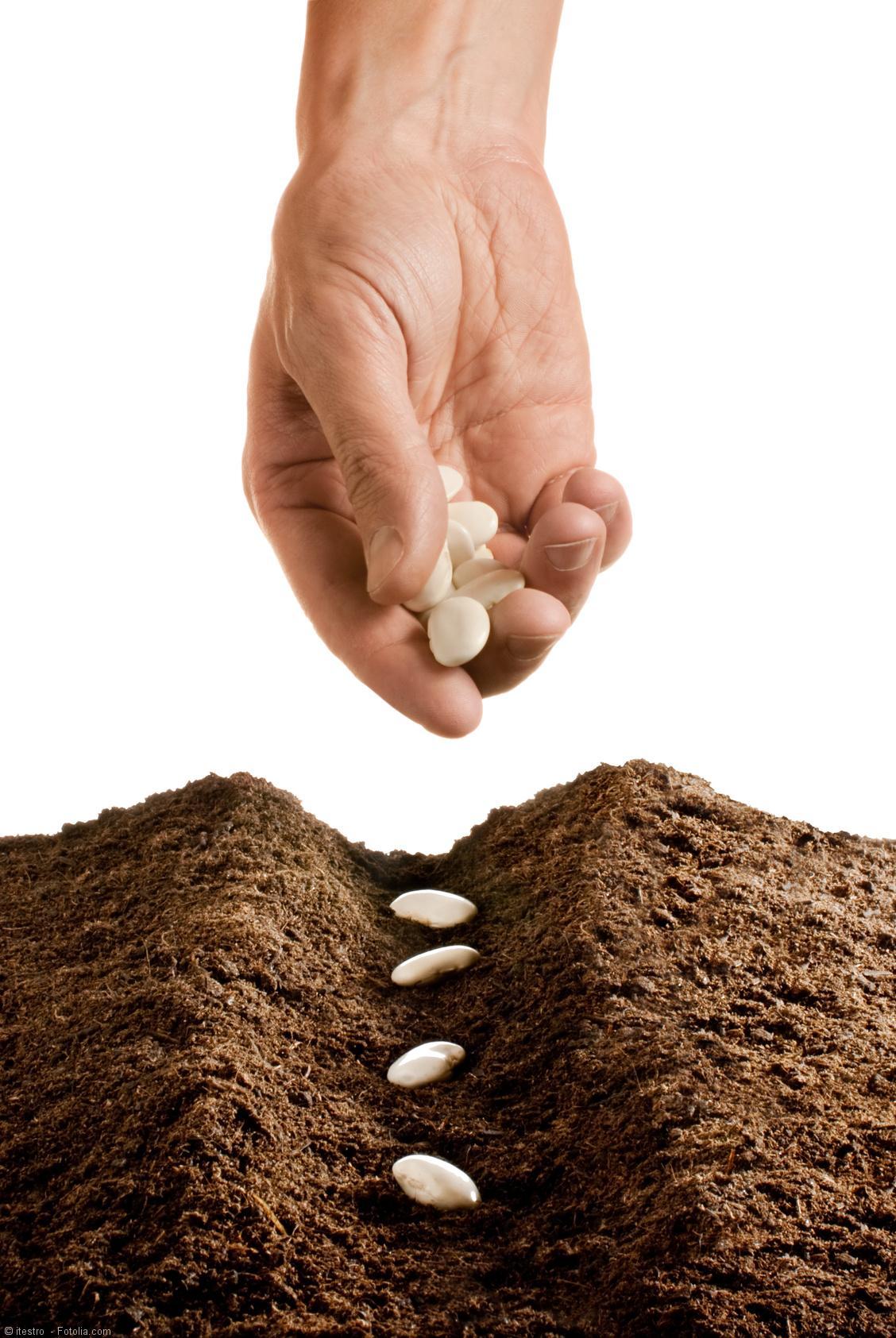 Diätfrei abnehmen und die richtige Saat in Form von passenden Überzeugungen